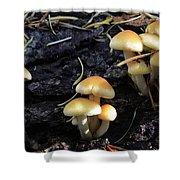 Mushrooms 6 Shower Curtain
