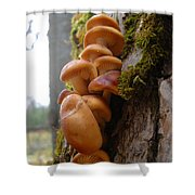 Mushrooms And Lichen Shower Curtain