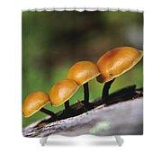 Mushrooms Growing On Log Shower Curtain