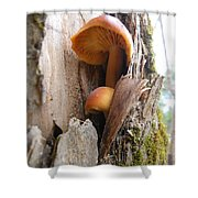 Mushrooms On A Tree Shower Curtain