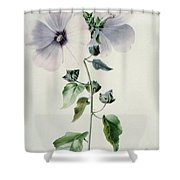 Musk Mallow Shower Curtain