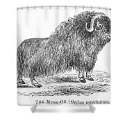 Musk Ox Shower Curtain