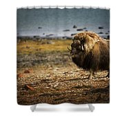 Muskox Ovibos Moschatusin The Northwest Shower Curtain