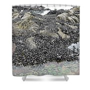 Mussels And Anemones  Shower Curtain