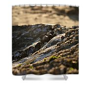 Mussels Sunset Shower Curtain