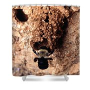 Mustached Mud Bee Shower Curtain