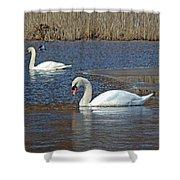Mute Swans On A Cape Cod Pond - Cygnus Olor - Quissett  Massachusetts Shower Curtain