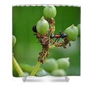 Mutualistic Shower Curtain