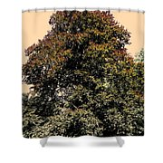 My Friend The Tree Shower Curtain