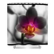 My Lil Treasure Shower Curtain