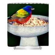 My Painted Bunting Shower Curtain