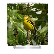 My Pretty Yellow Belly Shower Curtain