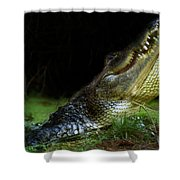 My Swamp Shower Curtain