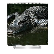 My What Big Teeth You Have Shower Curtain