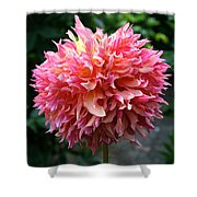 Myrtle's Folly Full Bloom Shower Curtain