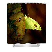 Mystical World Shower Curtain