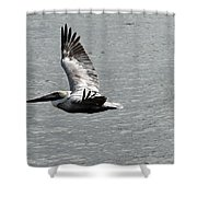 Naples Florida Pelican On The Prowl Shower Curtain