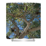 Naples Tree Shower Curtain