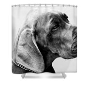 Napoleon Mischief Dog Portrait  Shower Curtain