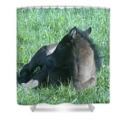 Napping Colt Shower Curtain