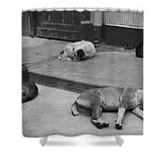 Napping Friends In Valparaiso Shower Curtain by Camilla Brattemark
