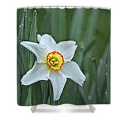 Narcissus In The Rain Shower Curtain