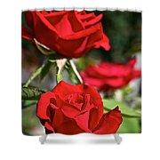National Trust Rose Shower Curtain