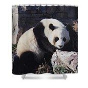 National Zoo Panda Shower Curtain