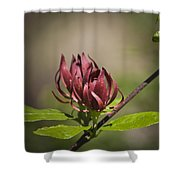 Native Sweetshrub Shower Curtain