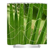 Natural Abstract 12 Shower Curtain