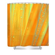 Natural Abstract 22 Shower Curtain