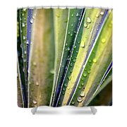 Natural Abstract 23 Shower Curtain