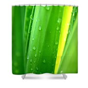 Natural Abstract 24 Shower Curtain