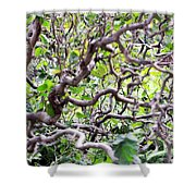 Natural Abstract 3 Shower Curtain