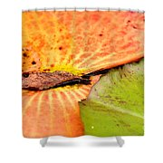 Natural Abstract 40 Shower Curtain