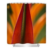 Natural Form Shower Curtain