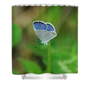 Natural Lace  Shower Curtain