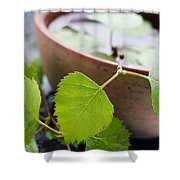 Natural Spa Shower Curtain
