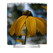 Natural Summer Colors Shower Curtain