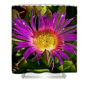 Nature Aglow Shower Curtain