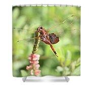 Nature Square - Saddleback Dragonfly Shower Curtain