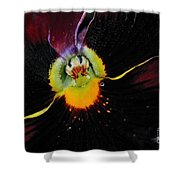 Nature's Amazing Colors - Pansy Shower Curtain