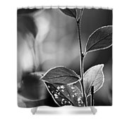 Natures Back Light Shower Curtain
