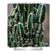 Nature's Cactus Abstract 2 Shower Curtain