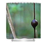 Nature's Protuberance Shower Curtain