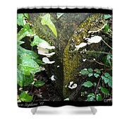 Natures Right Angle Degrees Shower Curtain