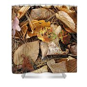 Nature's Still Life 1 Shower Curtain