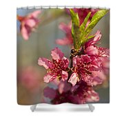 Nectarine Blossoms Shower Curtain
