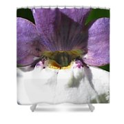 Nemesia From The Tapestry Mix Shower Curtain