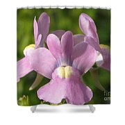 Nemesia Named Compact Pink Innocence Shower Curtain